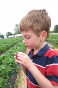 Landon loves picking strawberries