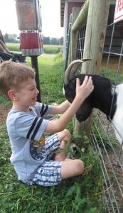 Landon loving goat