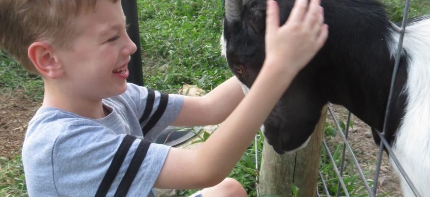 Landon feeling the goat's ears